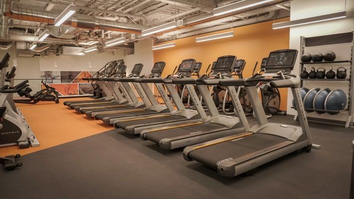 Active Wellness
